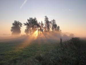 Das havelländische Luch ist alljährlich im Herbst und Frühwinter die Heimat der Kraniche
